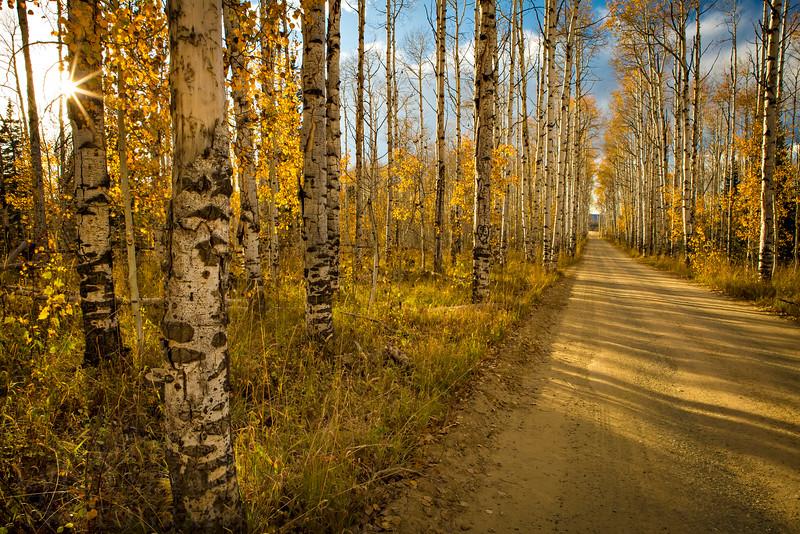 Aspen Alley Autumn
