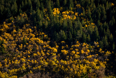 Fall in the Bighorns of northern Wyoming, outside of Sheridan.  Photo by Kyle Spradley | © Kyle Spradley Photography | www.kspradleyphoto.com