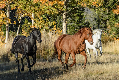 The Horses at Absaroka Ranch