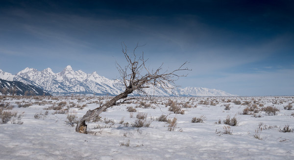 Lone Tree and Tetons