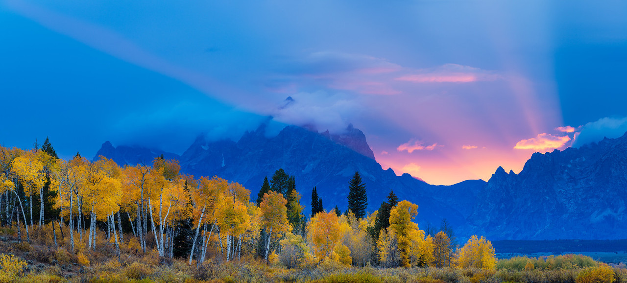 Fall colored aspen trees with sunset over the Grand Tetons, with rays adding to the drama on the scene.  Grand Teton National Park, Wyoming.
