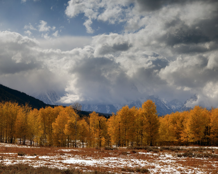 Clearing Storm and Autumn Leaves, Teton County, WY