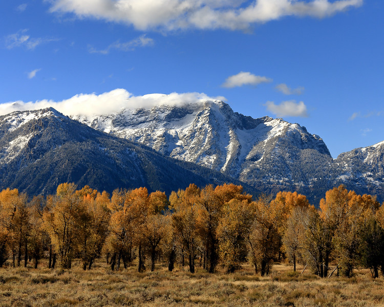 Autum Leaves and  Teton Range, Teton County, WY