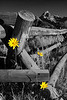 Grand Tetons Wildflowers
