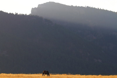 Horse at the base of the Bighorn Mountains