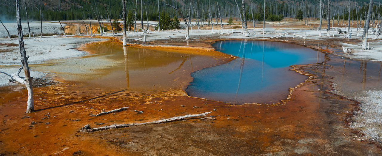 Opalescent Pool, in the Mid-Geyser Basin, amid bleeched, mineral covered lodgepole pines, Yellowstone National Park, Wyoming.
