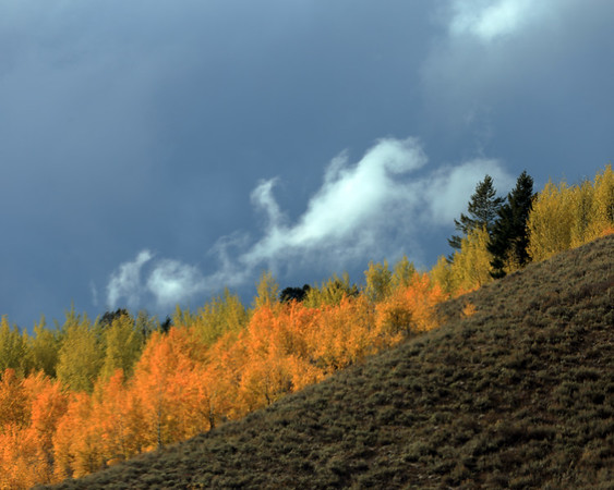 Clouds and Aspen Leaves, Moran, WY