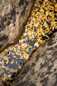 Leafy Grotto