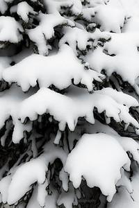 Frosty Bits
