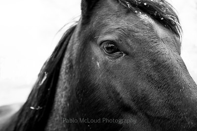 Eye of the Equine