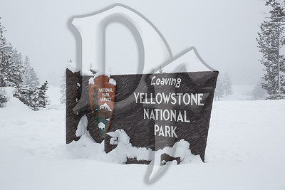 Leaving Yellowstone