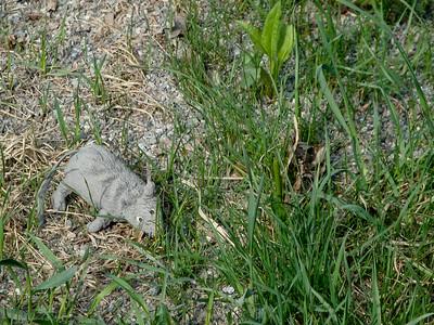 Abandoned rat