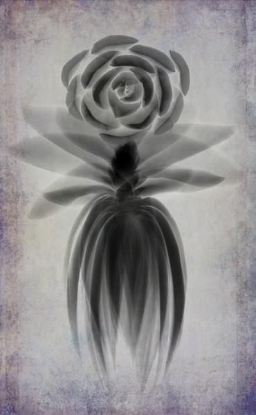 succulent body composite