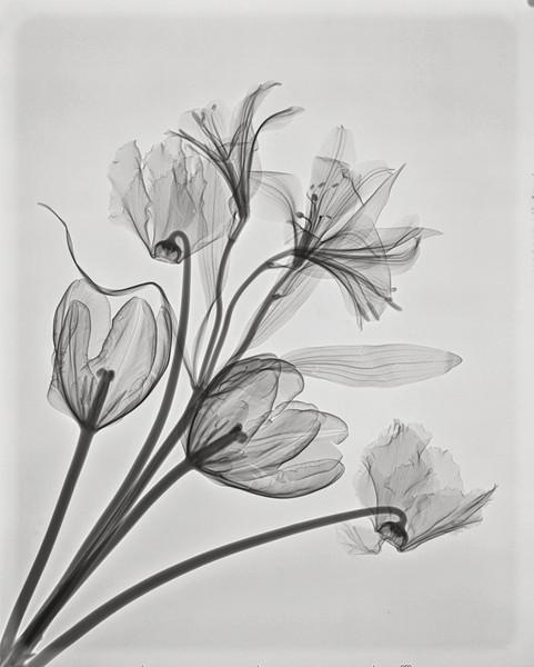 Bouquet 1 (Alstroemeria, parrot tulips &Cyclamen)