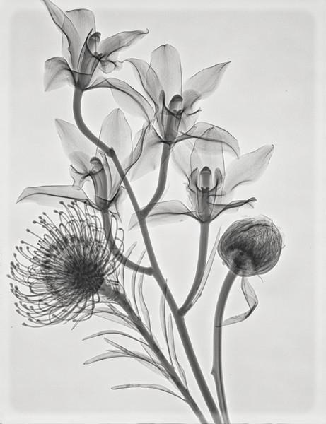 Bouquet 2 (Cymbidium Orchid, Pincushion protea,Peony)