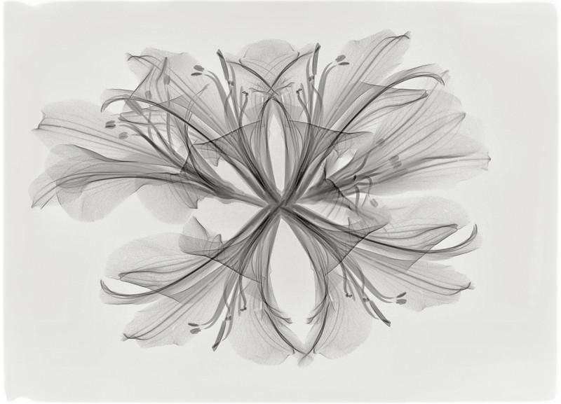 alstroemeria bouquet 2