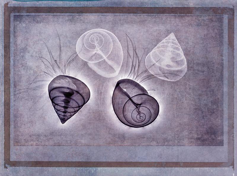 Tilandsias and shells