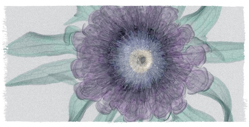 purple flower2color