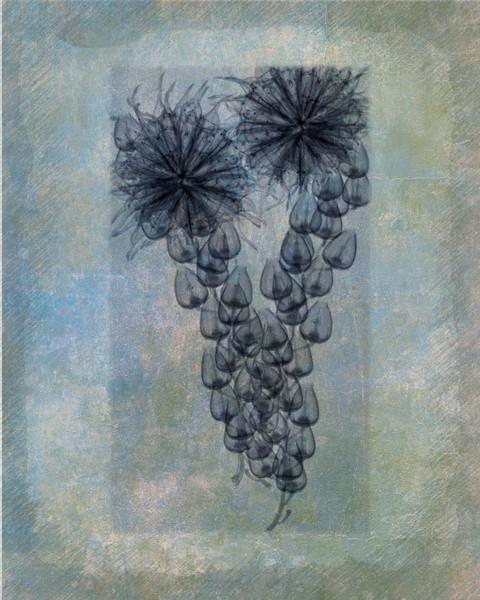 Blue Bells & Seed Pod Textured
