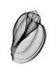 Xray photo of Ventral Harp Shell, Harpa ventricosa. Family Harpidae Harpinae