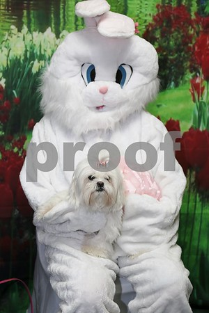 X-ta-C Dog  Easter Fund Raiser