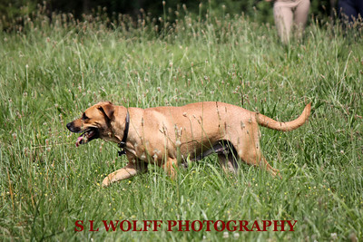 2012-06-10-DR-XC-Dogs-9529