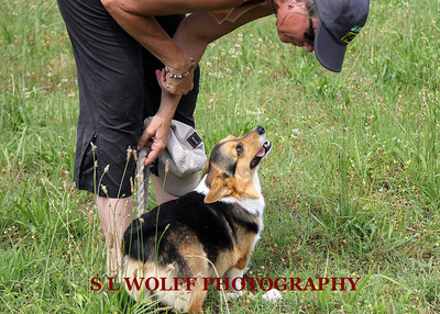 2012-06-10-DR-XC-Dogs-9250