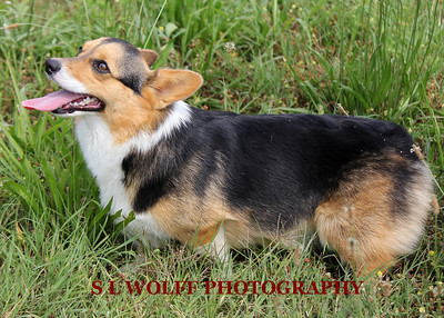 2012-06-10-DR-XC-Dogs-9249