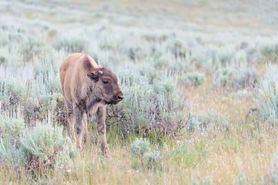 150721 - Yellowstone - 3039