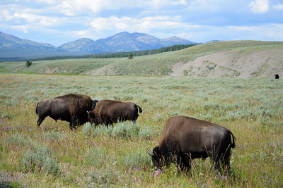 150721 - Yellowstone - 2692