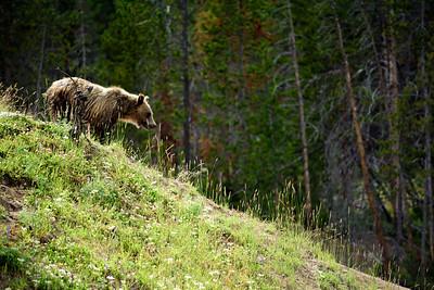 150721 - Yellowstone - 2493