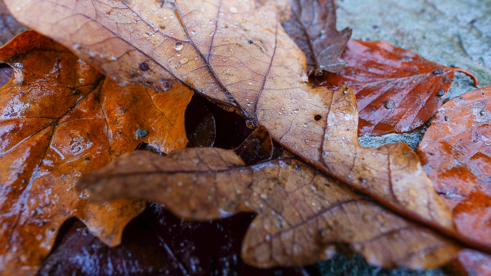 fujifilm xf16mm review - close up shot of leaves