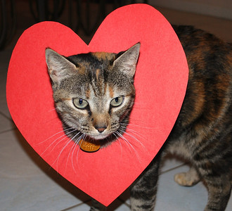 Valentine Kitty
