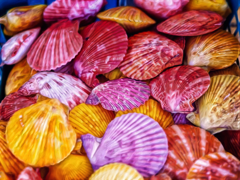 """Seashells"""