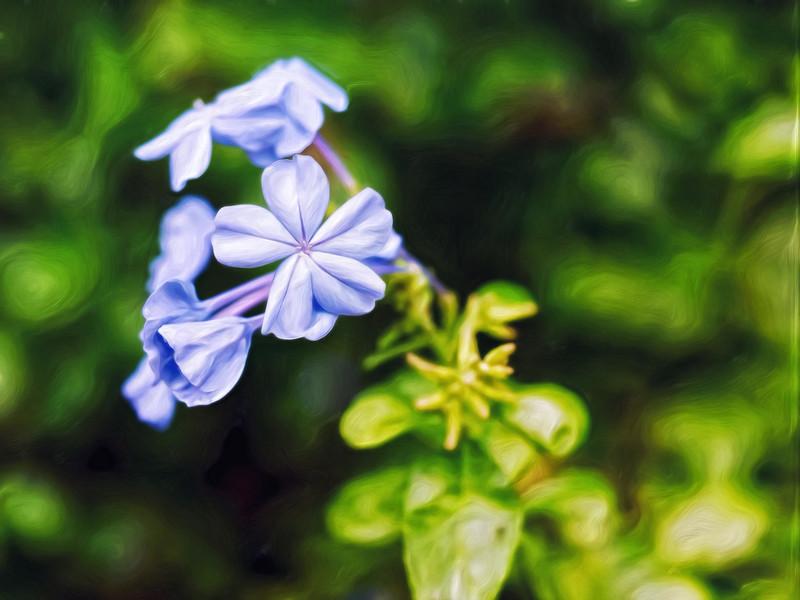 """Lavender Stars"""