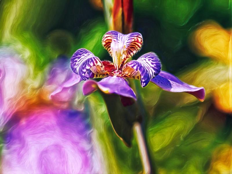 """Iris Versicolor"""