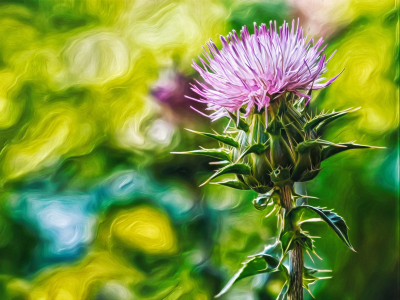 """Milk Thistle Portrait"""