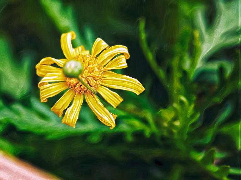 """Flower Bud"""