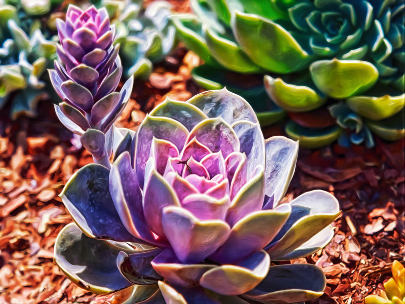 """Purple Succulents"""