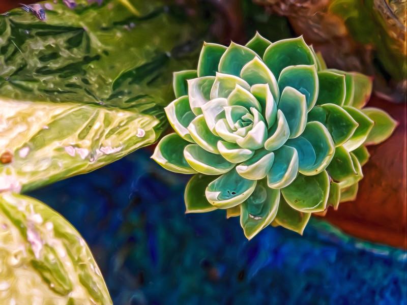 """Green Succulent"""