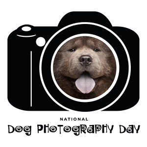 Dog Photography Day