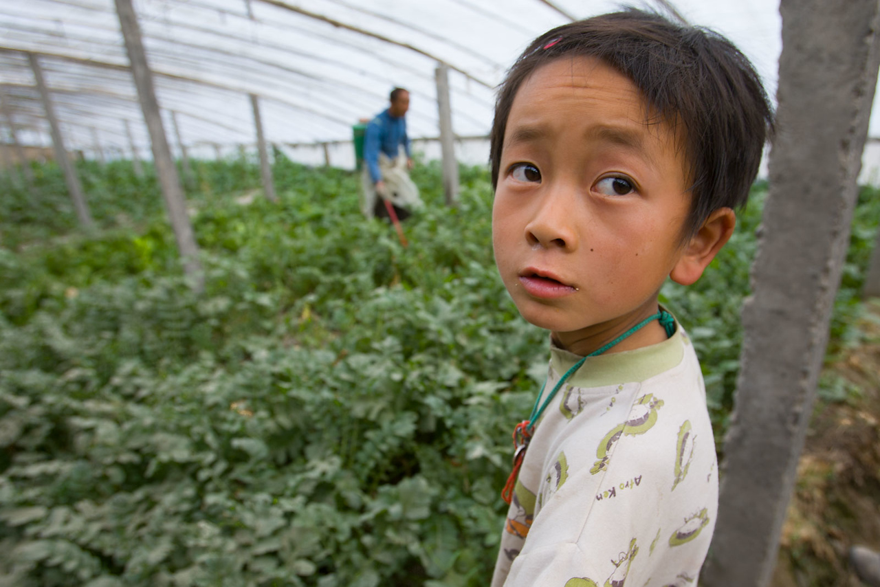 Greenhouse. Niya / Minfeng.