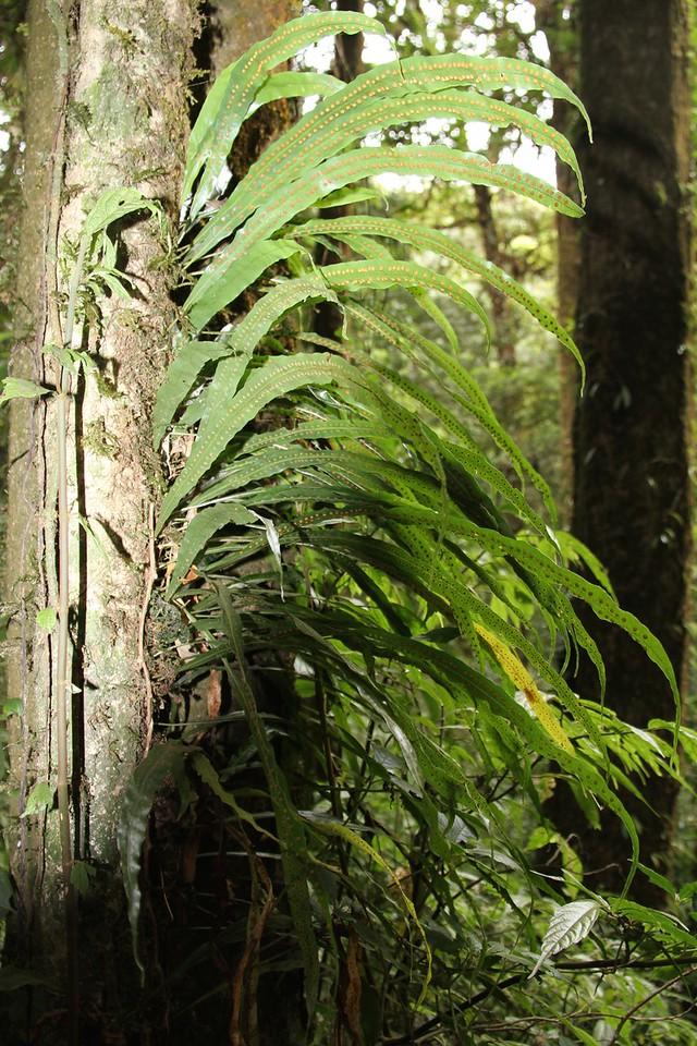 Cloud forest fauna
