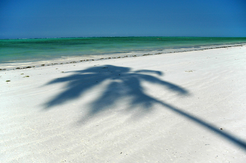 Location:  Zanzibar, Tanzania Paje beach in the middle of the east coast of Zanzibar