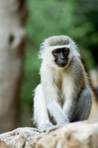 Location: Kruger National Park, South Africa
