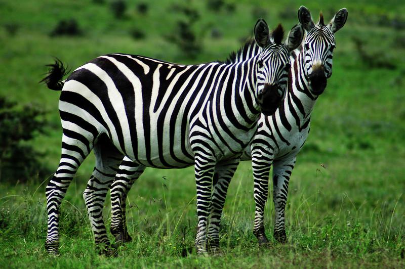 Location:  Above Ngorongoro crater, Tanzania