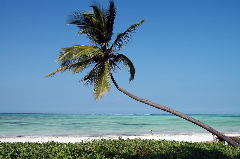 Location: Paje beach, Zanzibar, Tanzania