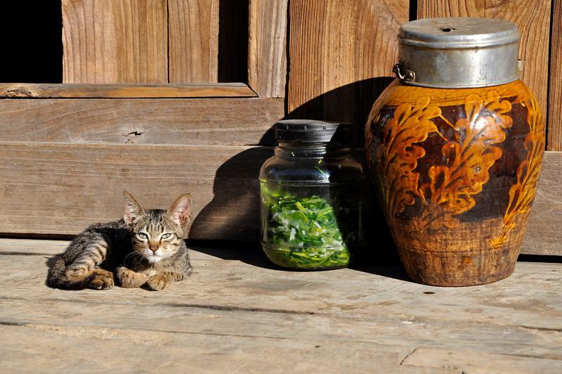 Lashio, Kitten enjony the morning sun