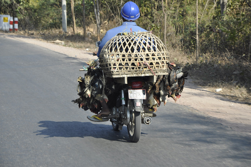 Mandalay, Live  Chicken delivery service