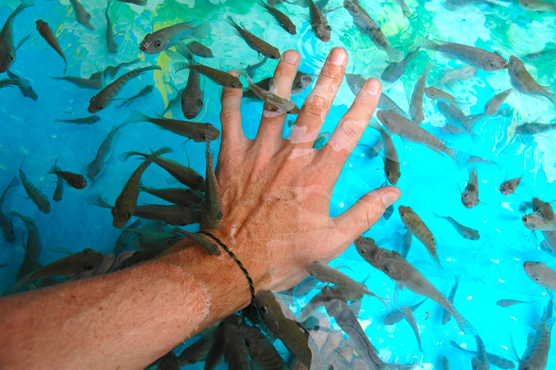 Siem Reap Cambodia, $1 fish massage